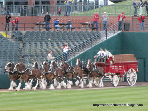 MemphisClydesdales.JPG